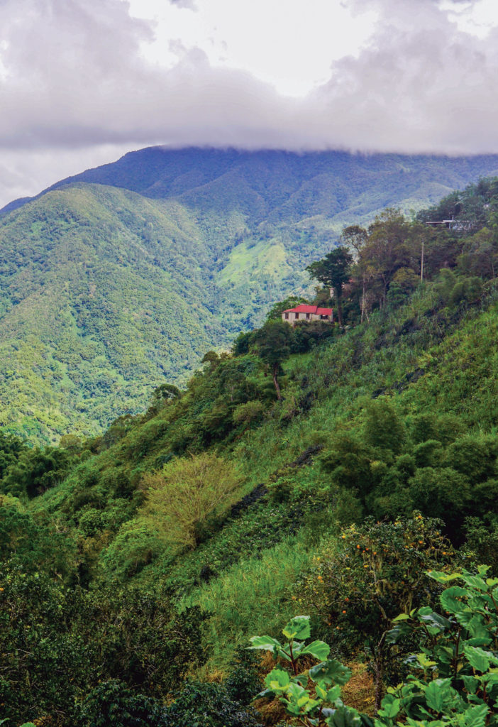 Coffee growers David and Chrissie Twyman's home is nestled into Jamaica's Blue Mountains.